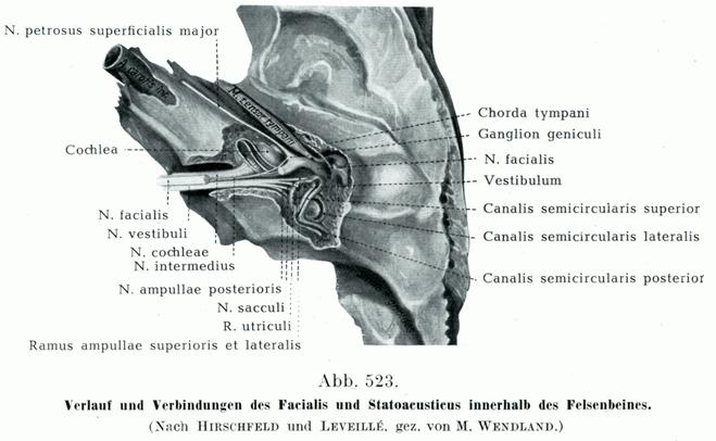 神経 内耳